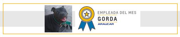 Gorda, asistente de seguridad en Araucar Motors